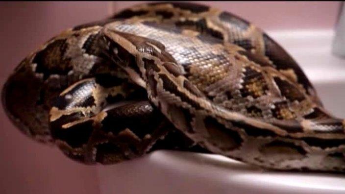 207 выпуск. Змея